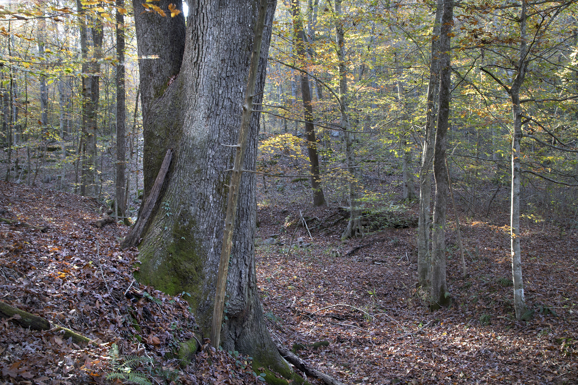 Land For Sale In Paint Rock Valley Al